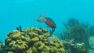 ケイマン諸島のサンゴ礁ライブカメラ/イギリス