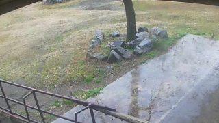 フェニックス自然動物園のラクダライブカメラと雨雲レーダー/宮崎県宮崎市