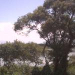 高島市新旭水鳥観察センターライブカメラ