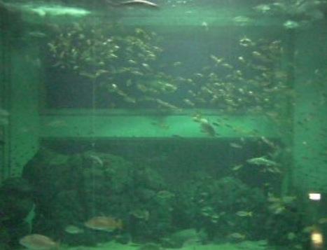 上越市立水族博物館の水槽ライブカメラ