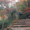 紅葉「大威徳寺」の360度パノラマカメラ