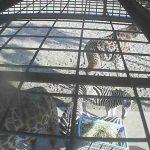 フェニックス自然動物園のアフリカ園餌場ライブカメラ