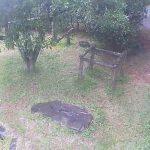 フェニックス自然動物園のレッサーパンダライブカメラ