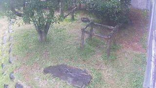 フェニックス自然動物園のレッサーパンダライブカメラと雨雲レーダー/宮崎県宮崎市