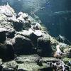 白浜水族館ライブカメラ