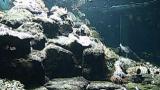 停止中:白浜水族館ライブカメラと雨雲レーダー/和歌山県白浜町