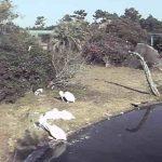 フェニックス自然動物園のペリカンライブカメラ