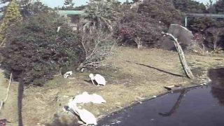 フェニックス自然動物園のペリカンライブカメラと雨雲レーダー/宮崎県宮崎市