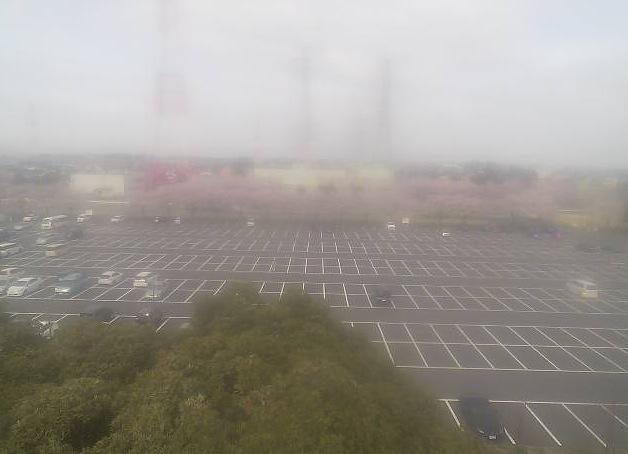 さいたま水上公園の駐車場と桜ライブカメラ