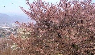 八代ふるさと公園ライブカメラと雨雲レーダー/山梨県笛吹市