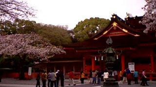 停止中:富士山本宮浅間大社の桜ライブカメラと雨雲レーダー/静岡県富士宮市