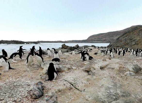 露岩地帯・ラングホブデのアデリーペンギンのルッカリー(集団繁殖地)360度パノラマカメラ