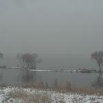 琵琶湖 水鳥公園ライブカメラ