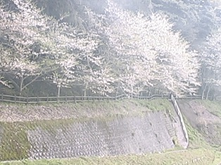 巌洞ファーム周辺の桜ライブカメラ