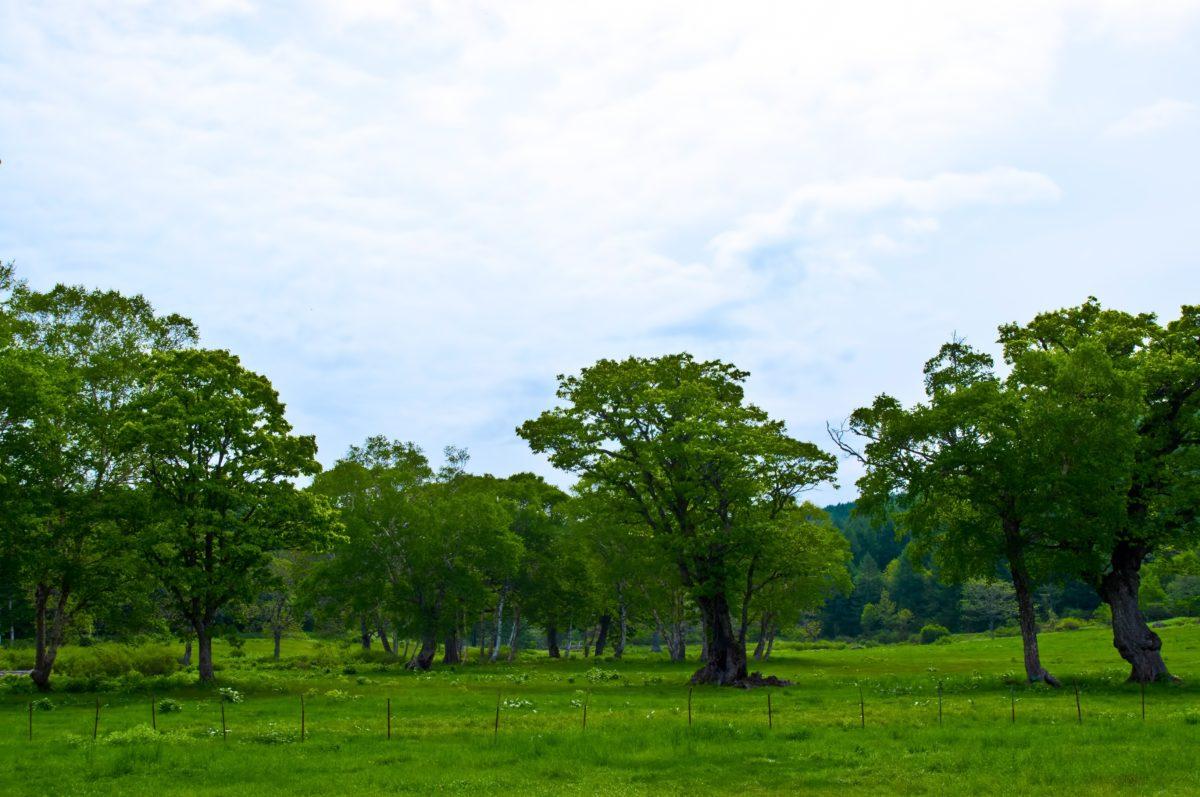 志賀高原のライブカメラ一覧
