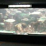 のとじま水族館ライブカメラ