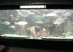石川県七尾市 のとじま水族館ライブカメラと雨雲レーダー