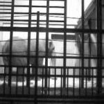 茶臼山動物園 ゾウがみれるライブカメラ