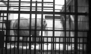 茶臼山動物園 ゾウがみれるライブカメラと雨雲レーダー/長野県長野市