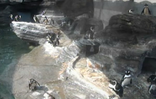 サンシャイン水族館のペンギンライブカメラ