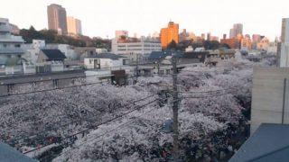目黒川沿いの桜並木ライブカメラ①と雨雲レーダー/東京都目黒区