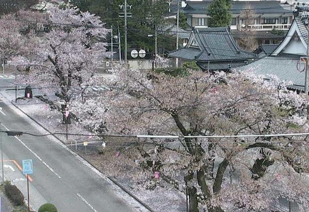 飯田市並木通りライブカメラ