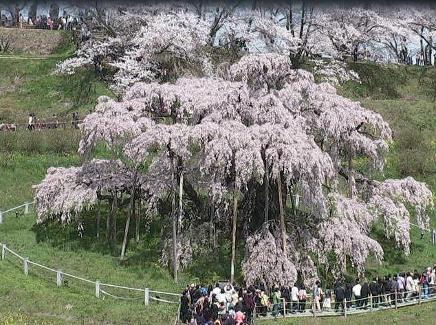 滝桜ライブカメラと雨雲レーダー/福島県三春町