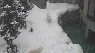 停止中:旭山動物園 ほっきょくぐま館ライブカメラと雨雲レーダー/北海道旭川市