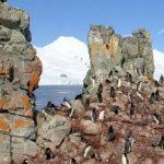 南極大陸ハーフムーン島のペンギンストリートビュー