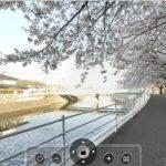 宇美川沿いの桜並木の360度パノラマカメラ