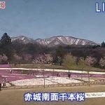 赤城南面千本桜ライブカメラ