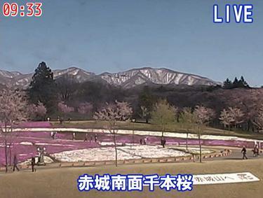 赤城南面千本桜ライブカメラ2
