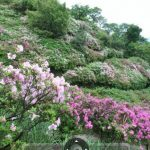 皿山公園(つつじ)の360度パノラマカメラ