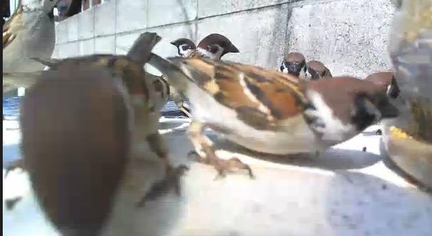 スズメライブカメラ/ねこひた農園