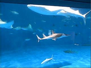 かごしま水族館・黒潮大水槽ライブカメラ