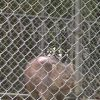 五月山動物園・ウォンバット(屋外)ライブカメラ