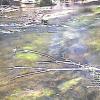 上高地ビジターセンター 清水川ライブカメラ