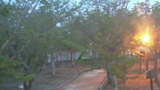 唐津城 桜の花 ライブカメラと雨雲レーダー/佐賀県唐津市