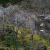 会津東山温泉向瀧の桜ライブカメラ
