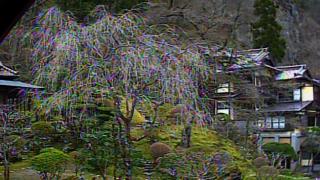 会津東山温泉向瀧の桜ライブカメラと雨雲レーダー/福島県会津若松市
