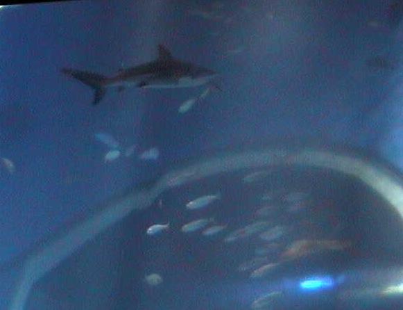 停止中:アクアワールド大洗水族館・サメ、マンボウ大水槽ライブカメラと雨雲レーダー/茨城県大洗町
