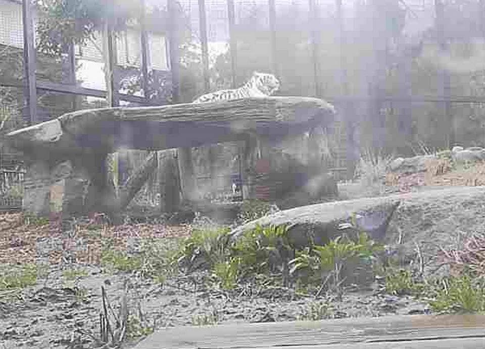 """鹿児島県鹿児島市 平川動物公園の""""ホワイトタイガー""""ライブカメラと雨雲レーダー"""