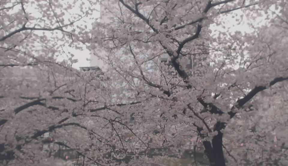 中目黒・目黒川の桜並木ライブカメラ②と雨雲レーダー/東京都目黒区