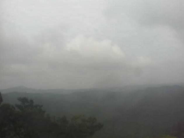 やんばるの照葉樹林ライブカメラ