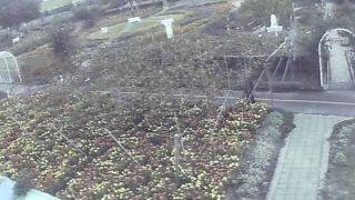 ハーブワールドAKITAライブカメラと雨雲レーダー/秋田県由利本荘市