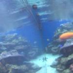 ワイキキ水族館ライブカメラ