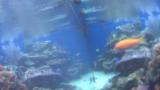 ワイキキ水族館ライブカメラ/ハワイ