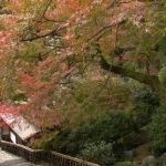 大興善寺契園の紅葉ライブカメラ