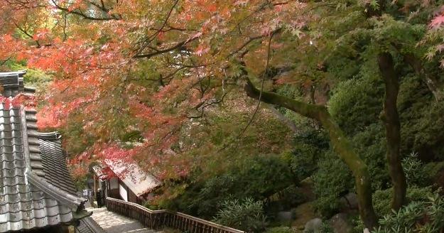 大興善寺契園の紅葉ライブカメラと雨雲レーダー/佐賀県基山町