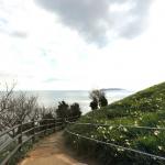 黒岩水仙郷の360度パノラマカメラ